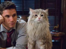 Una vita da gatto: in onda Sabato 25 Maggio 2019 su Italia Uno, cast, trama e orario