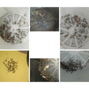 Buzz Trapper: trappola per zanzare e insetti elettronica con luce Led, funziona davvero? Recensioni, opinioni e dove comprarla