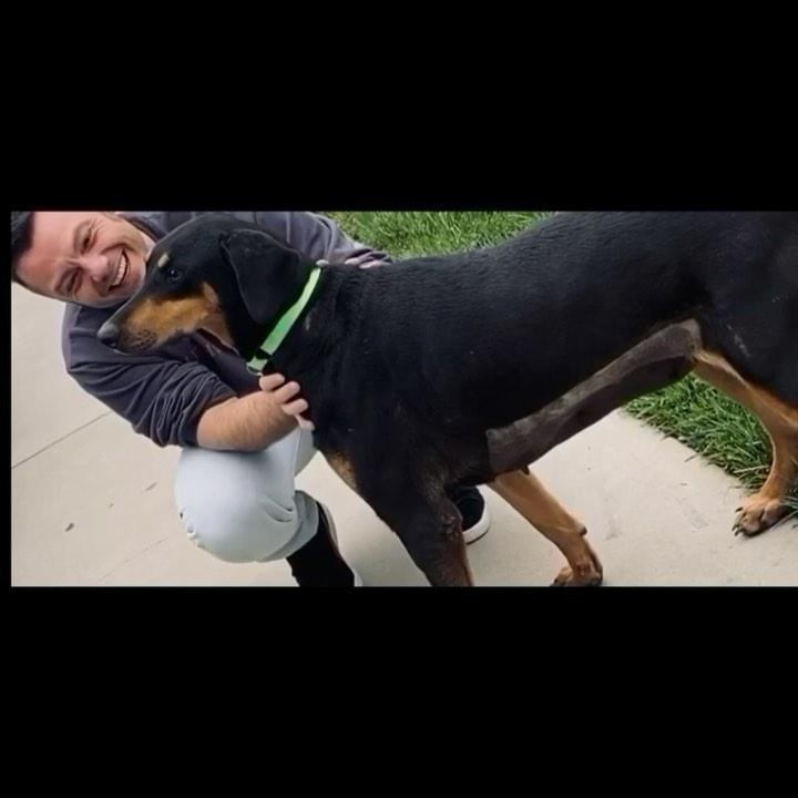 Tiziano Ferro adotta due cani: