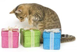 Età dei Gatti: come calcolare l'età umana in modo semplice e veloce